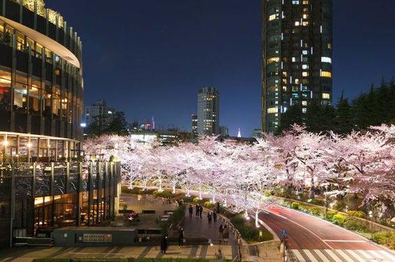 桜ライトアップ(過去の様子)/画像提供:東京ミッドタウンマネジメント