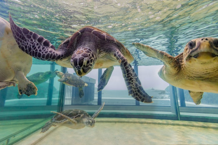 ウミガメ水槽/提供画像