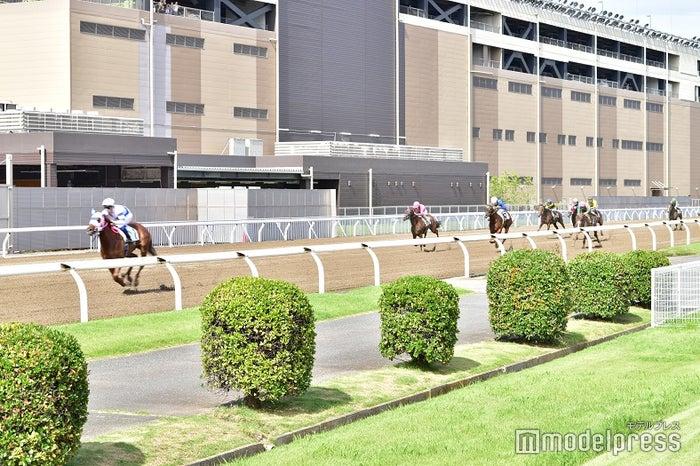 間近で馬が颯爽と走る姿は迫力満点