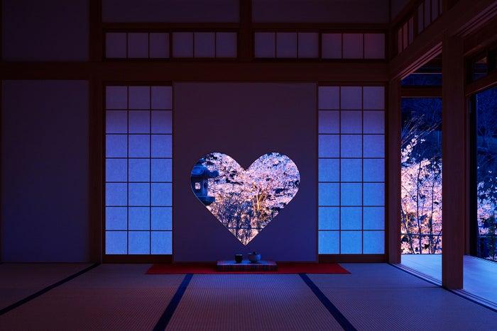 京都「正寿院」の夜桜ライトアップが幻想的 初の一般公開へ/画像提供:正寿院