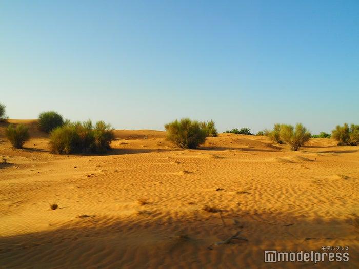 どこまでも続くオレンジ色の砂地が美しいドバイの砂漠(C)モデルプレス