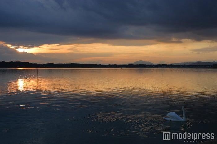 涸沼の白鳥/画像提供:(一社)茨城県観光物産協会