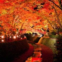 昼と夜楽しめる!地元の人がおすすめする京都の「思わずため息が出る紅葉スポット」
