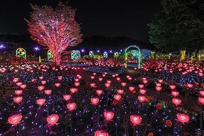 あしかがフラワーパーク 光の花の庭/画像提供:一般社団法人夜景観光コンベンション・ビューロー