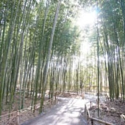 教えたくないけど教えます♡ 京都の穴場スポット「竹林の散策路」の魅力