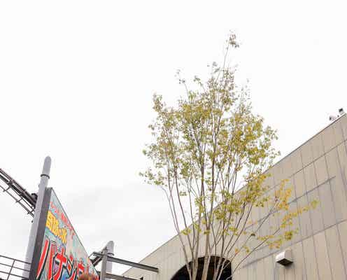 櫻坂46菅井友香&日向坂46佐々木久美「W-KEYAKI FES.」開催記念のケヤキの木設立報告