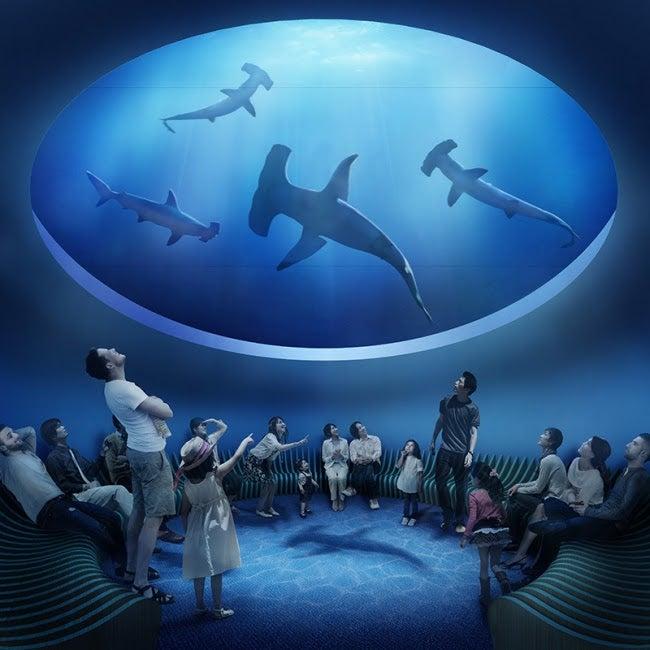 サメを見上げる水槽/画像提供:四国水族館開発