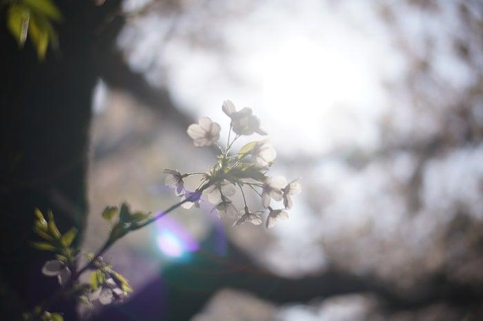 (C)Momoka Ariyasu