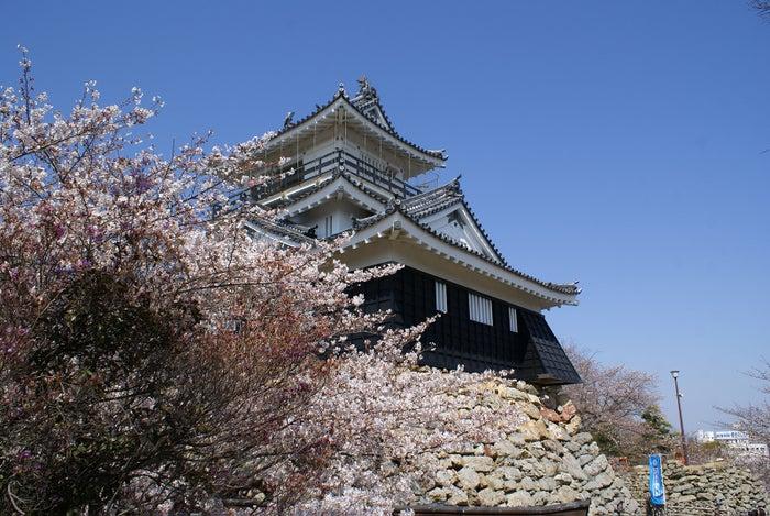 浜松城/写真提供:浜松観光コンベンションビューロー