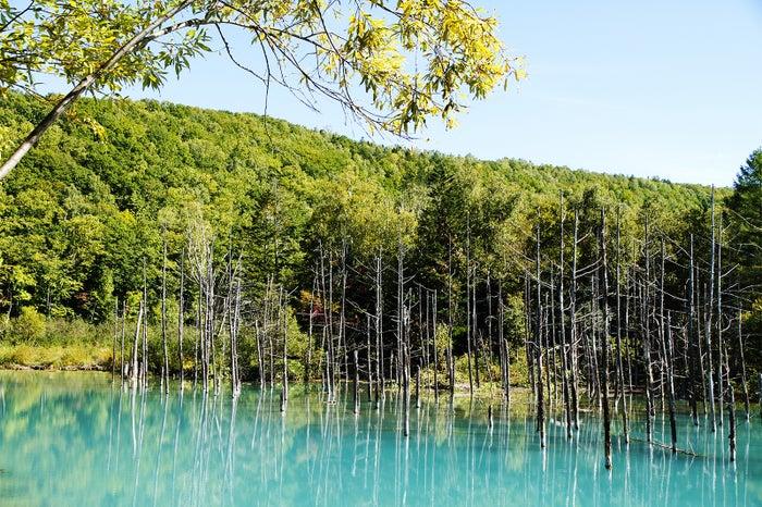 白金青い池/画像提供:美瑛町観光協会