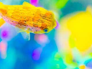 周辺でも楽しめる!東京デートに「すみだ水族館」がおすすめの理由4つ