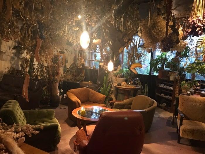 オシャレな秘密基地植物園とカフェバーの店内風景(提供元:秘密基地植物園とカフェバー)