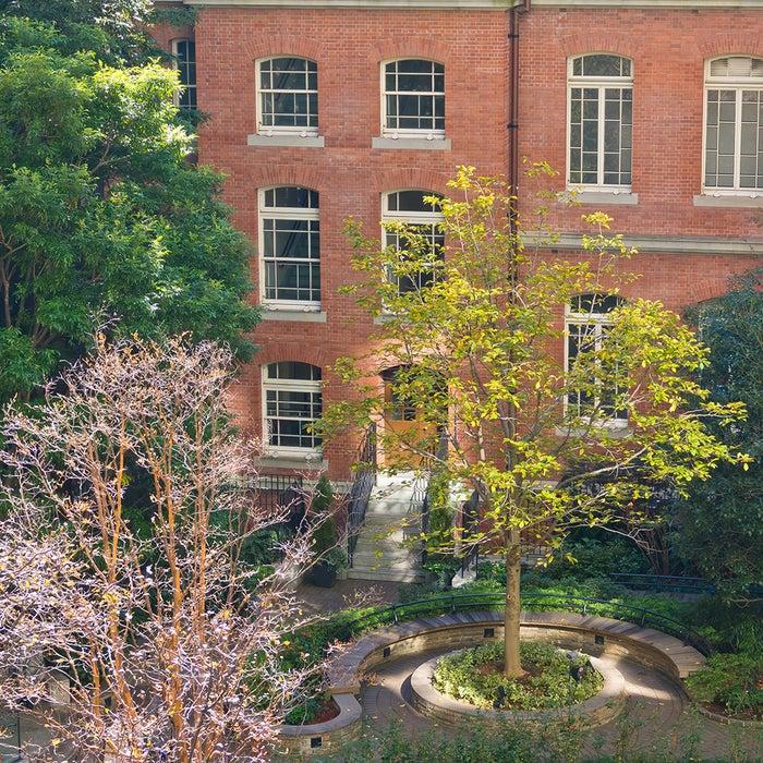 イギリス庭園をイメージした中庭は、多種のバラや様々な植物が植えられ、憩いの場として人気/画像提供:三菱一号館美術館