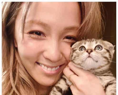 """""""保護猫""""迎える芸能人増加 Dream Ami・ミキ亜生…木村花さんが繋いだ出会いも話題"""