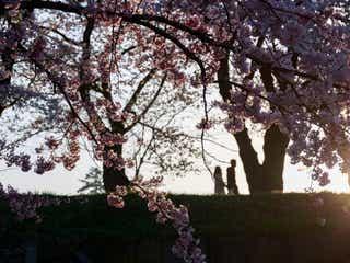 男子の願望! 春こそ、デートで訪れたいスポット6