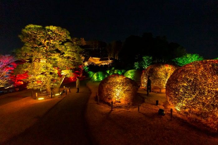 チームラボ 偕楽園 光の祭/画像提供:チームラボ