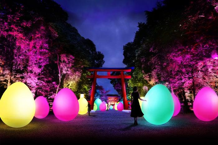 呼応する、 たちつづけるものたちと森 – 下鴨神社 糺の森/画像提供:チームラボ