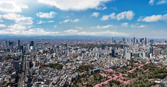 絶景と桜のコラボレーション/画像提供:森ビル株式会社