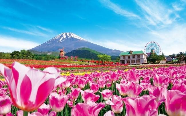 2019天空のチューリップ祭り/画像提供:富士急行株式会社