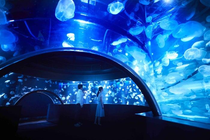 クラゲワンダー/画像提供:京都水族館