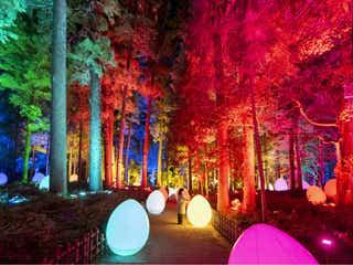 約1,500本の梅が光り輝く!「チームラボ」と日本の三名園「偕楽園」がコラボし、新アート空間が誕生