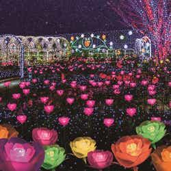 光のバラ園~ハピネスガーデン~ Flower Fantasy/画像提供:足利フラワーリゾート