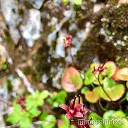 色とりどりの高山植物が咲き誇る(C)モデルプレス