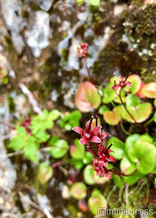 色とりどりの高山植物が咲き誇る(C)ビューティーガール