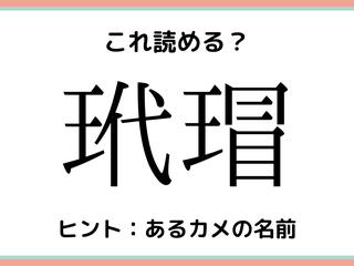 「玳瑁」って何!?読めたらスゴイ《難読漢字》4選