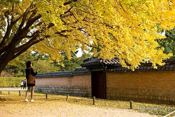 景福宮/画像提供:韓国観光公社