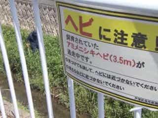 自ら鍵壊した可能性も 横浜でニシキヘビ逃げ出す
