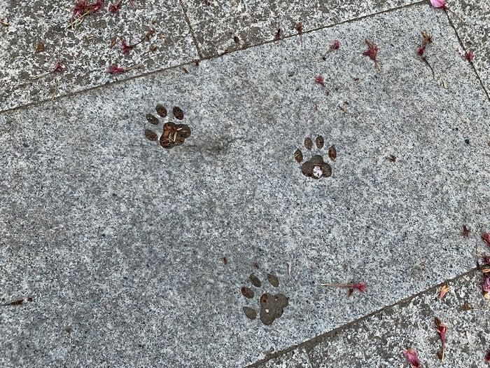 石畳には猫の足跡も。肉球まで愛らしい/提供写真