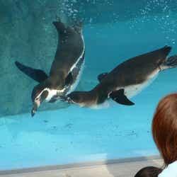 ペンギンのお食事タイムを見ることもできます/提供画像