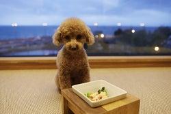 愛犬と泊まれる温泉ホテル「レジーナリゾートびわ湖長浜」全室琵琶湖一望のレイクビュー