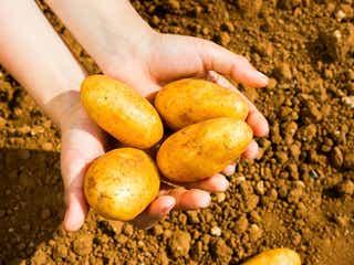 【ベランダ菜園におすすめの野菜&ハーブ #9】3月はジャガイモを植えよう!