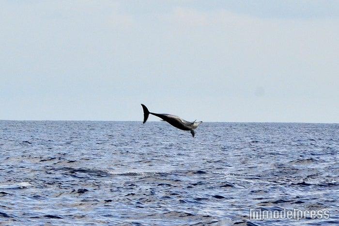 サンセットシャンパンクルーズ/イルカの大ジャンプ(C)モデルプレス