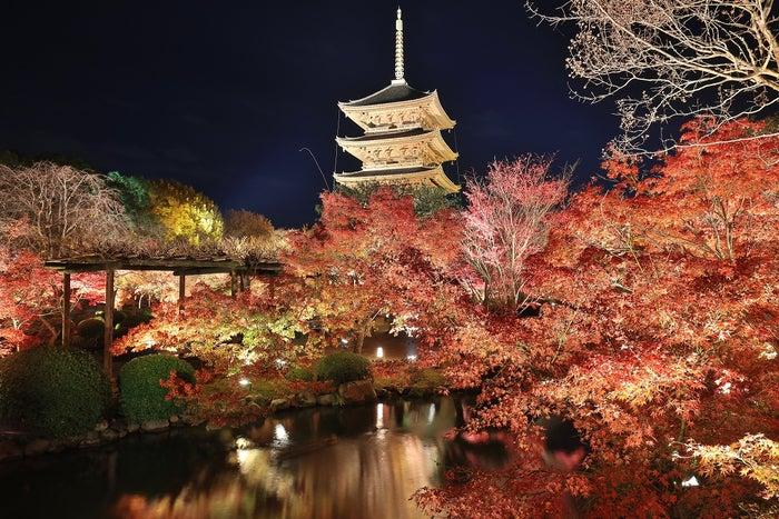 京都の紅葉は「夜に行く」&「夜パフェ」が新定番?混雑回避の旅行プランも/東寺の夜の紅葉(提供元:東寺)
