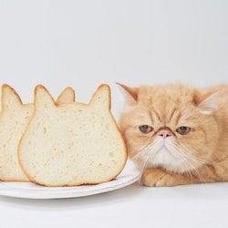 かわいさ&おいしさに感動♡新店舗ができるたび売り切れ続出の猫型食パン店
