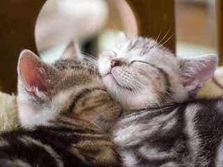 「ねこがかわいいだけ展」が猫の可愛さの限界に挑戦 東京・大阪・横浜ほか全7会場で開催