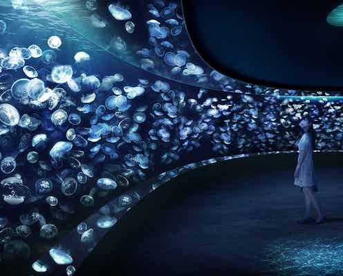サンシャイン水族館に新クラゲエリア「海月空感」2020年誕生