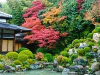 ここ知ってる?京都旅館の女将が教える紅葉穴場スポット3選