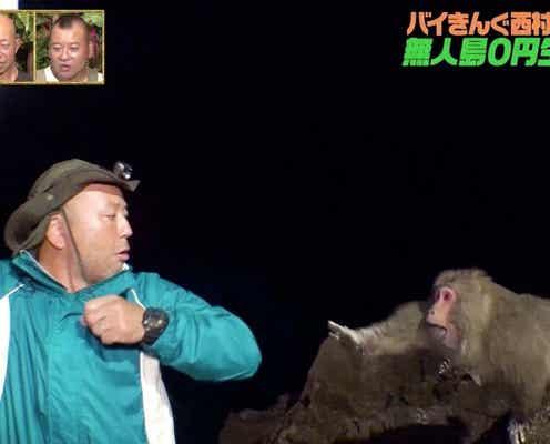 野生の猿、バイきんぐ西村に襲いかかる 無人島で食材かけた手に汗握るシーソーゲームに小峠英二「緊張感のある回」
