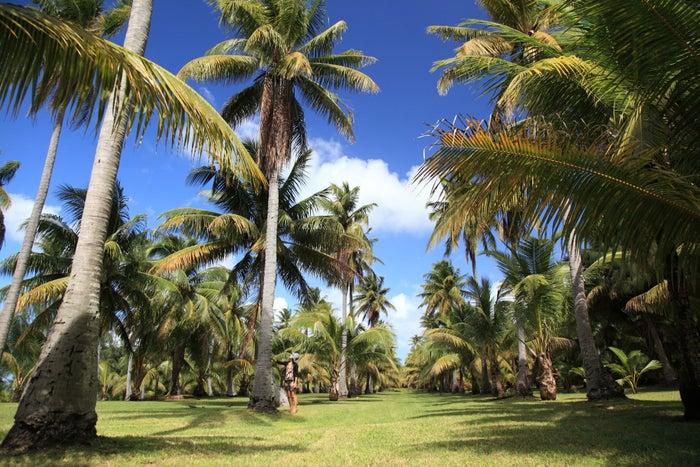 南国を象徴するヤシの木が立ち並ぶ姿は圧巻(C)マリアナ政府観光局/MVA