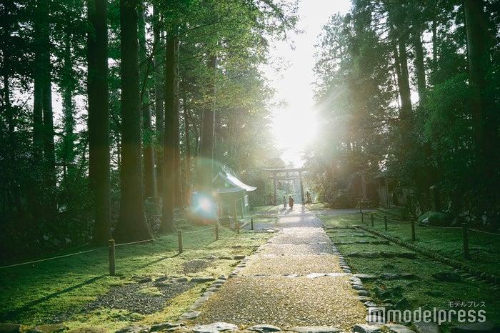 神秘的な雰囲気に吸い込まれそうになる平泉寺の参道。 (C)モデルプレス