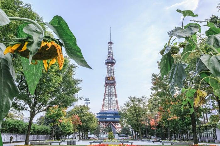 札幌・大通公園/photo by ぱくたそ