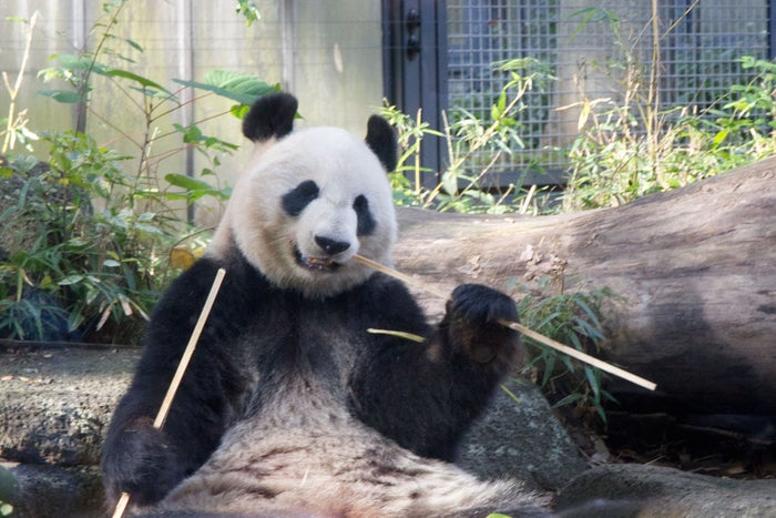 パンダで有名の上野動物園