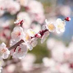 【12星座別】3月の総合運