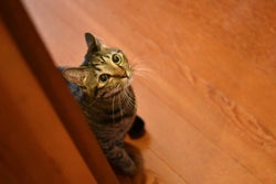 台風前日に外から聞こえる子猫の声…!その時、夫婦がとった行動とは?