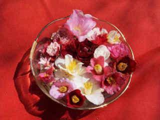 年に2回しか見られない「花の天井」や願いが叶う椿も♡ 絶対に行くべき京都「平岡八幡宮」の魅力