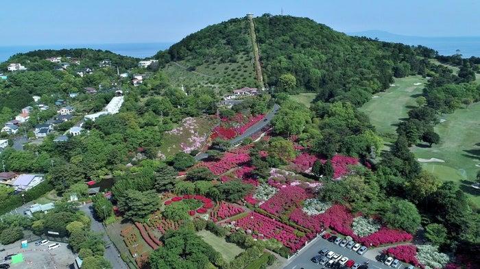 伊東市小室山公園/画像提供:小田急電鉄